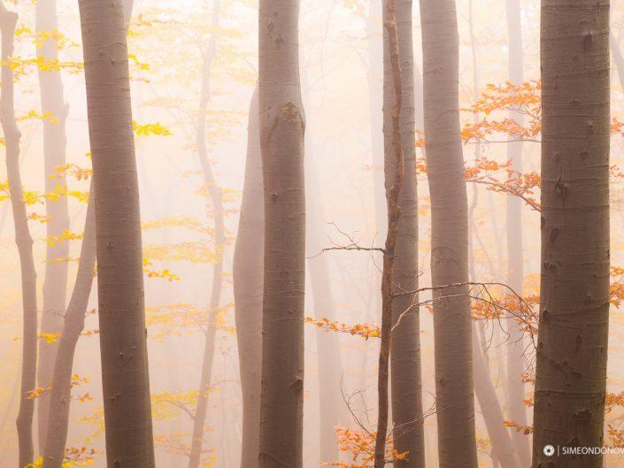 Мъглива есенна импресия, Природен парк Витоша