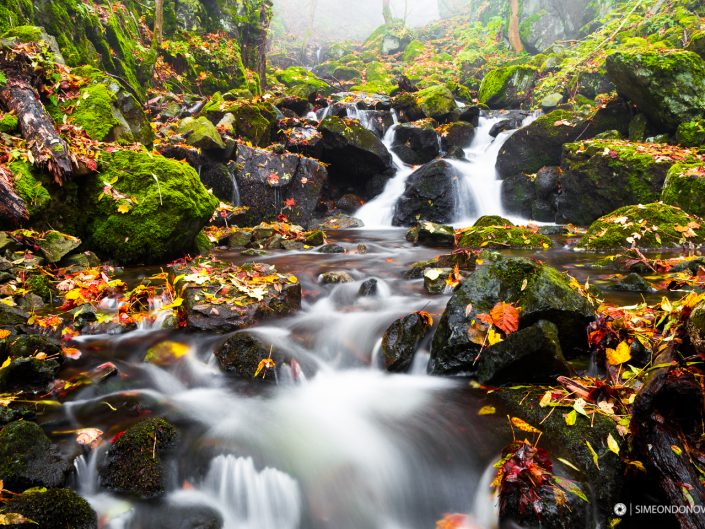Боянска река, Природен парк Витоша