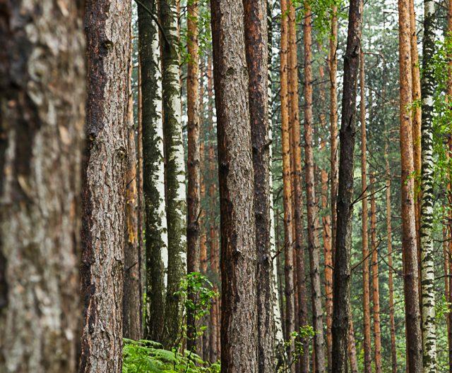 Борова гора – Природен парк Врачански Балкан