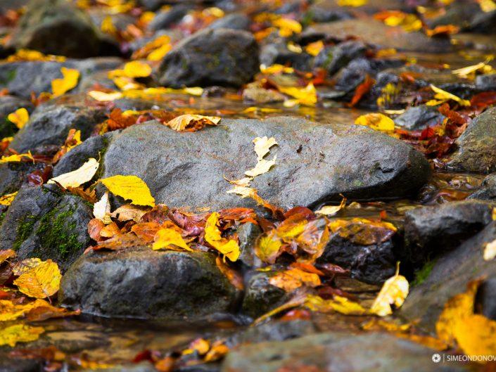 Златна есен в Природен парк Витоша