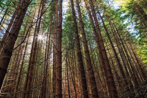Смърчова гора, Биосферен резерват Чупрене
