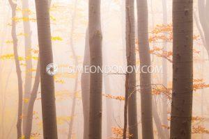 Мъглива есенна импресия, Природен парк Витоша. Витоша есен.