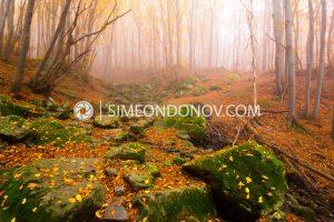 Eсен в Природен парк Витоша
