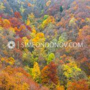 Витоша в прегръдката на есента. Есен в парк Витоша.
