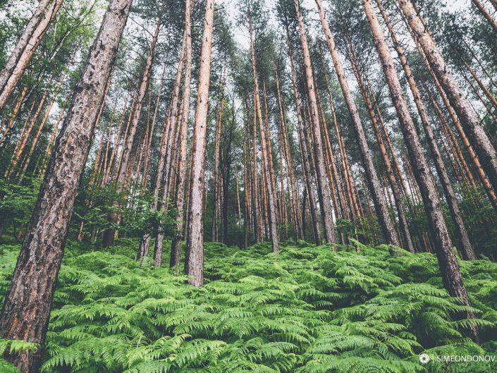 Борова гора, Природен парк Врачански Балкан
