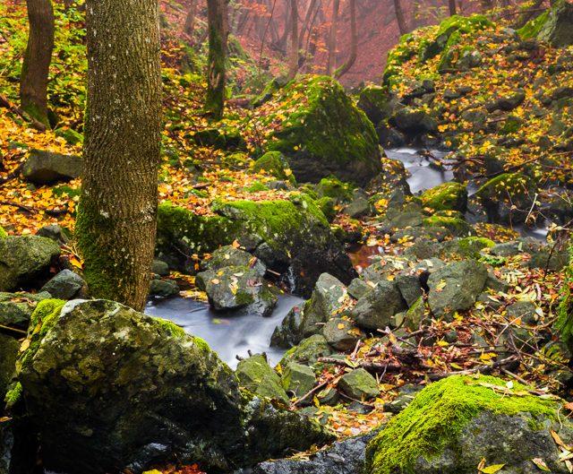 Есен на реката – Боянска река, Природен парк Витоша