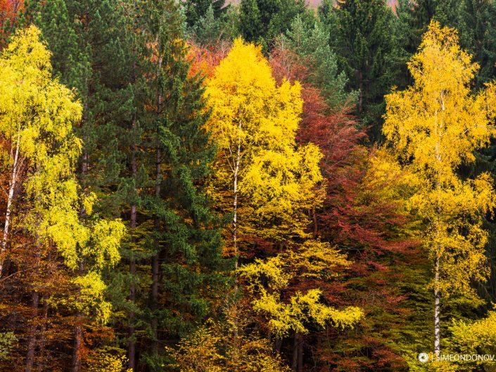 Есенна гора – Природен парк Витоша