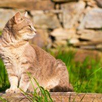 Котка – село Лещен, Западни Родопи