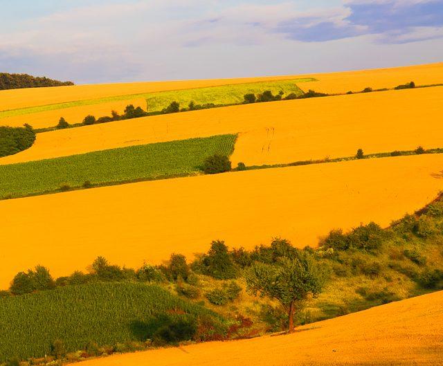 Пшенични полета, Северна България