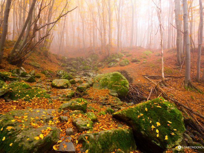 Витоша и есента, Природен парк Витоша