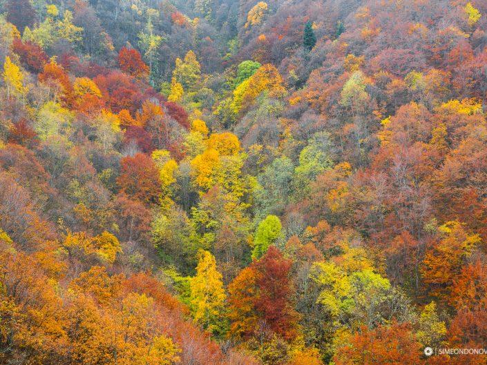 Парк Витоша в прегръдката на есента