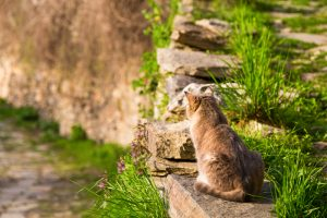 Cat sitting on a stone garden wall in the sun facing away from the camera with fresh green spring grass and copy space
