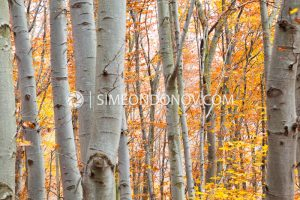 Есенна импресия, Природен парк Витоша