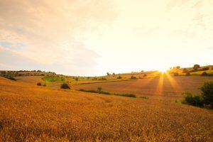 Залез над пшеничните полета